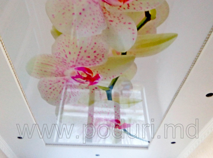 Натяжной потолок фотопечать орхидеи