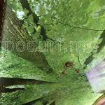 Потолок с фотопечатью лес